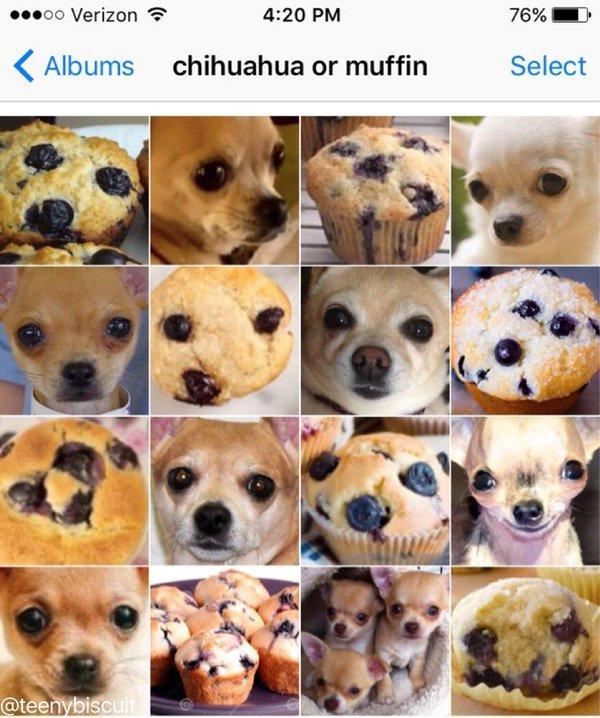 Cara de cachorro - meme