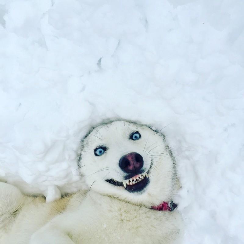 Ice doggo is always watching!! - meme