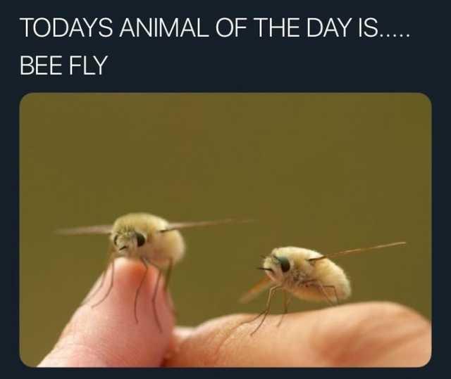 Aka humbleflies - meme