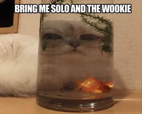 Meow wars - meme