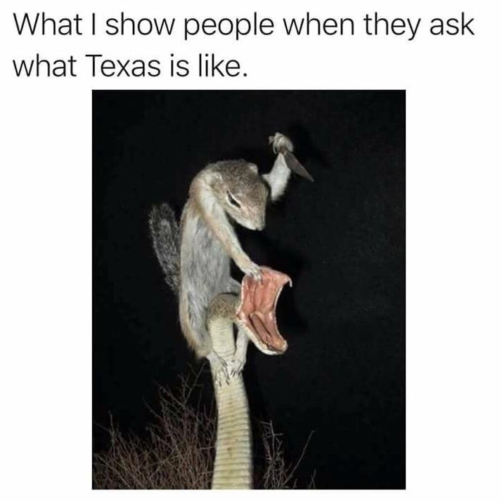 Texas is like . . . - meme