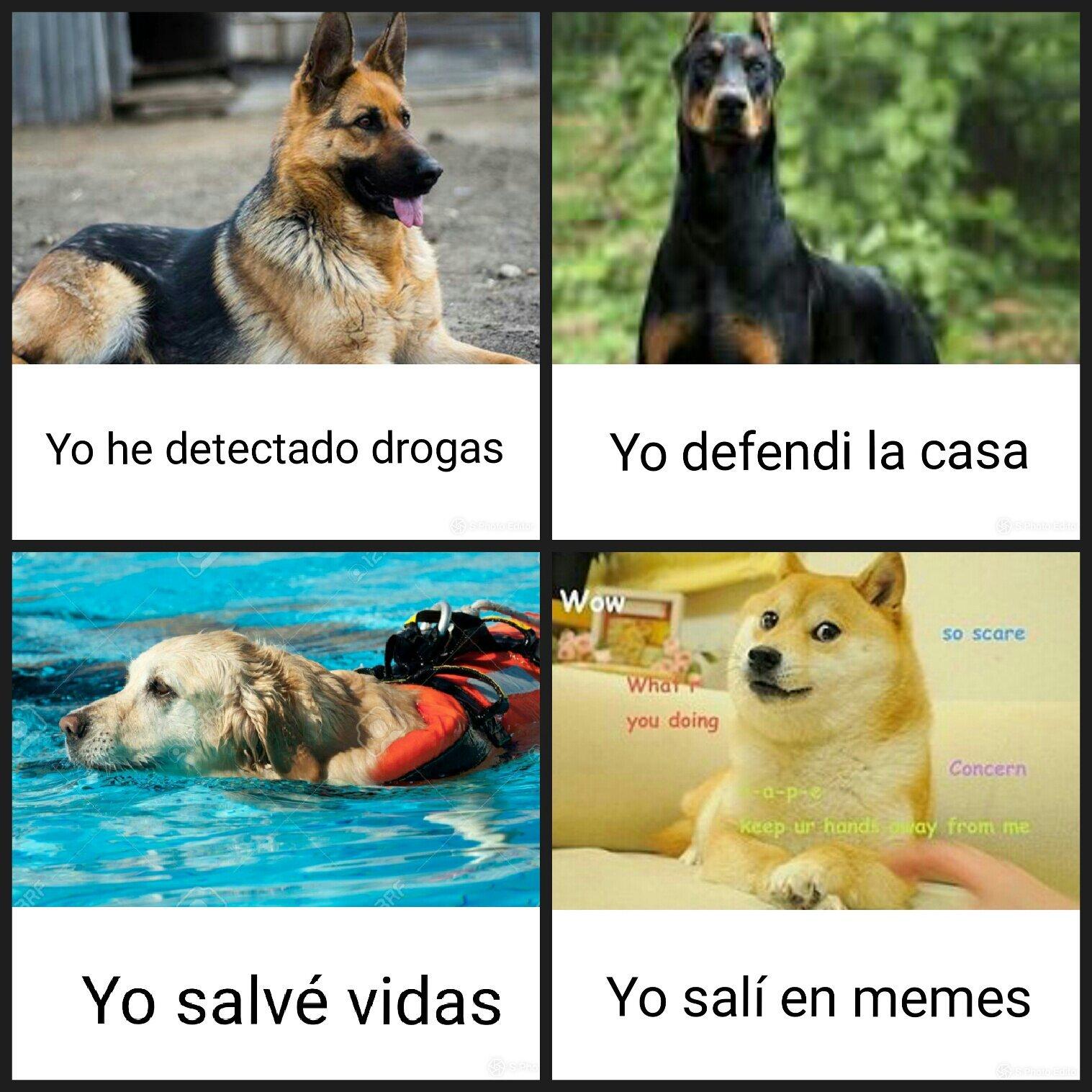 Poder de perro - meme