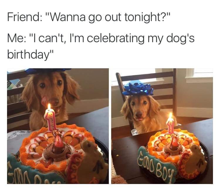 The Best Dog Birthday Memes Memedroid