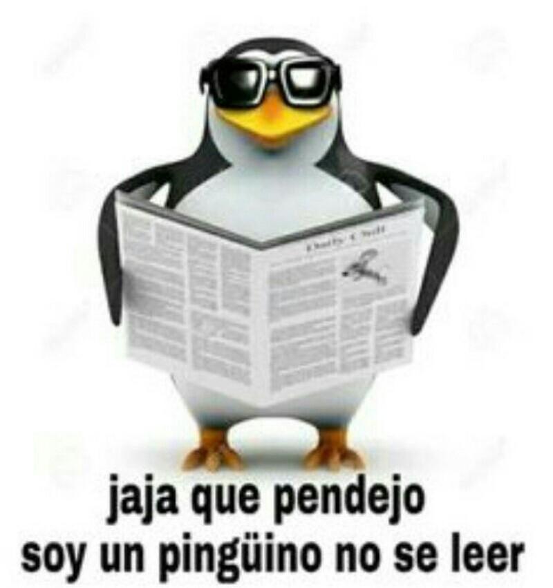 Jaja pinguino ciego - meme