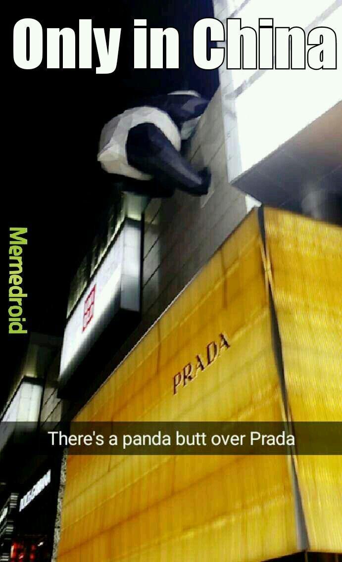 Original Post + Panda Butt.... Please love me... ._. - meme