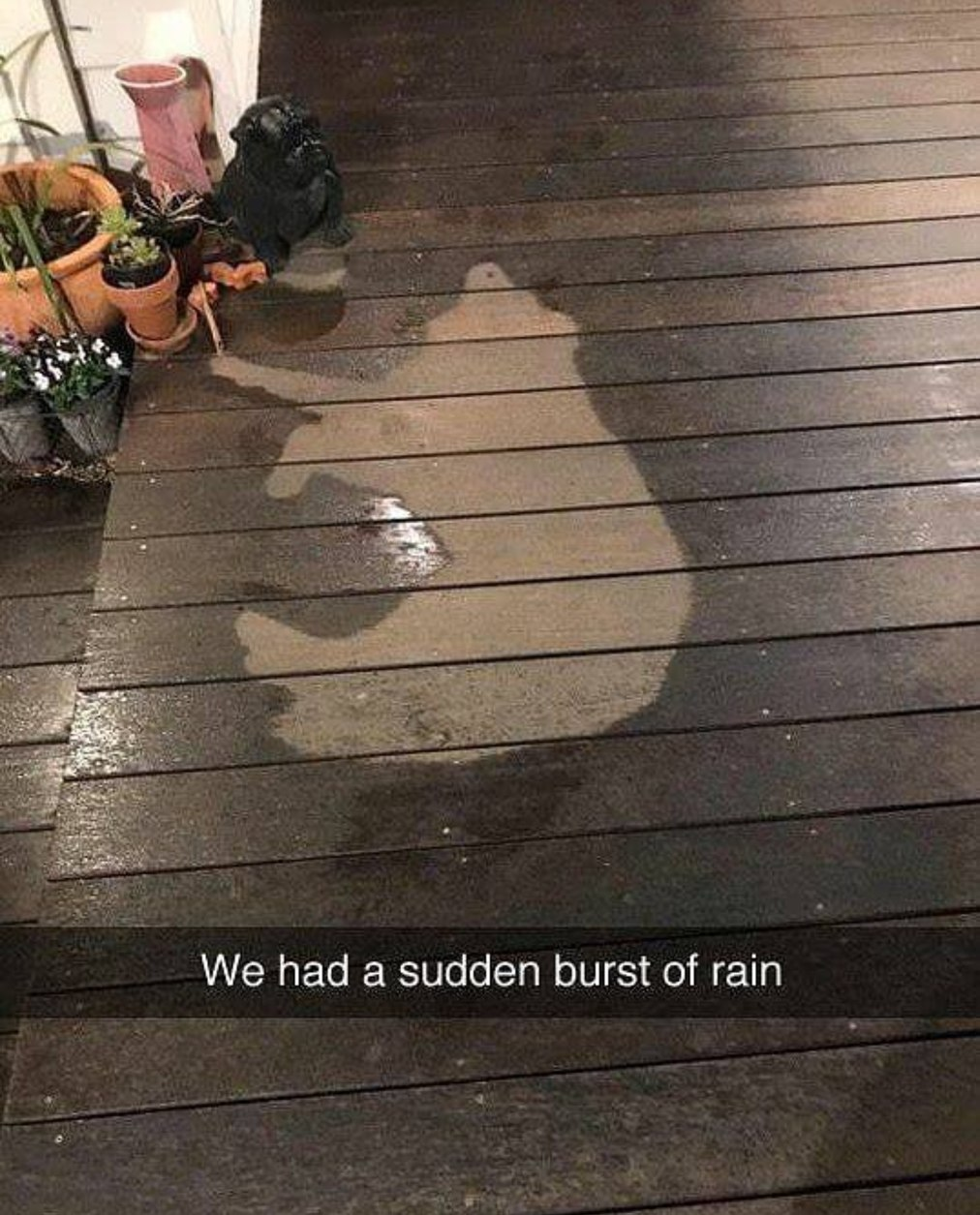 Pobre little cachorro - meme