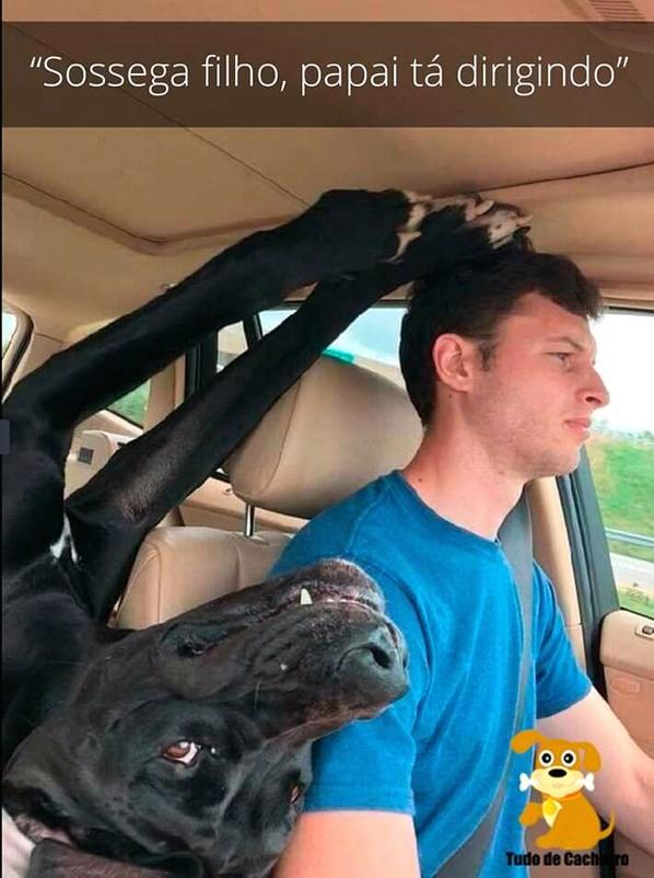 Pior que meu dog já fez isso - meme