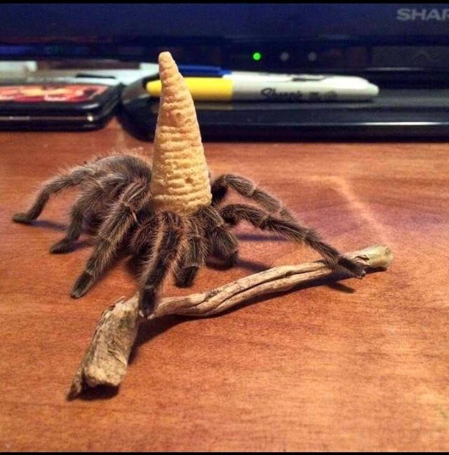 Spider Wizard - meme