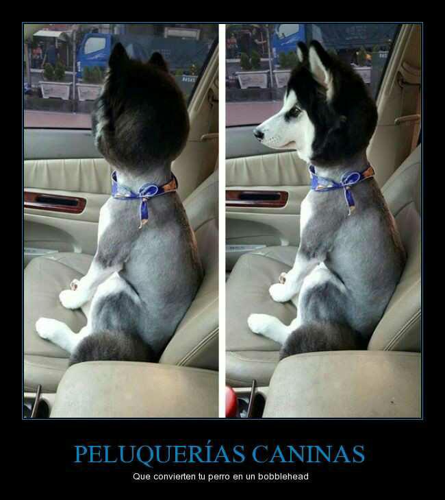 Peluquerías Caninas - meme