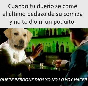 Perros :v - meme