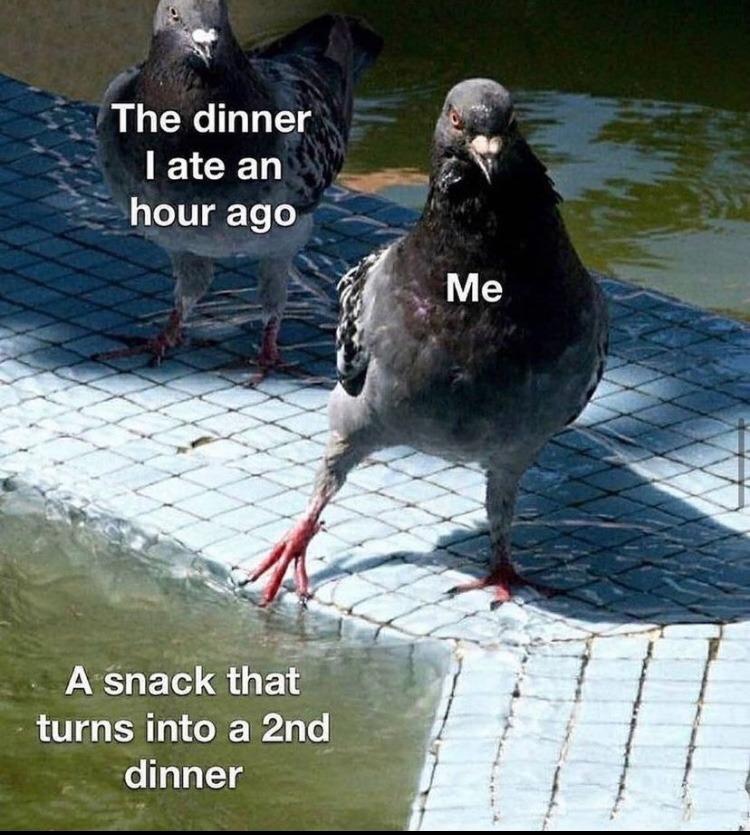 pigeon - meme