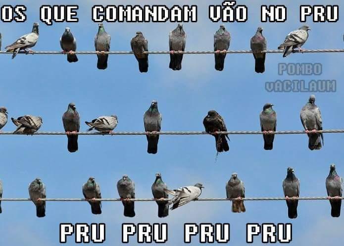 Pru Pru Pru Pru Pru - meme