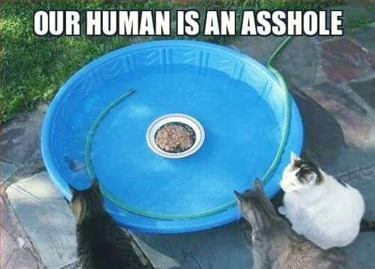 Cats version of hunger games - meme