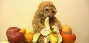 Monke Cat - meme