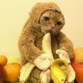 Monke Cat