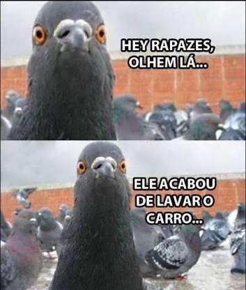 perolas dos Pombos PRUU 2 - meme