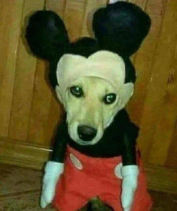 A mouse dog chimera I call it a mog - meme
