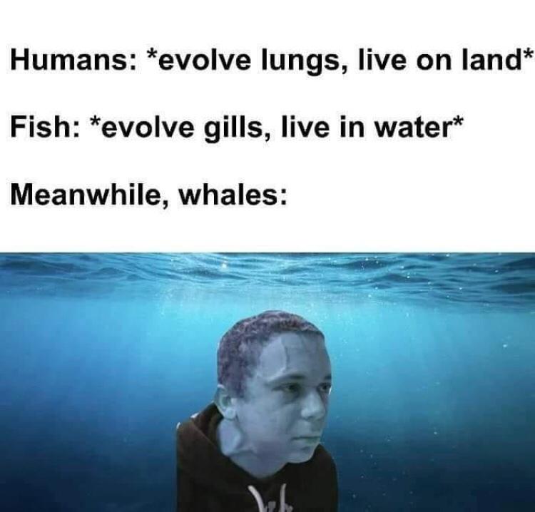wel - meme