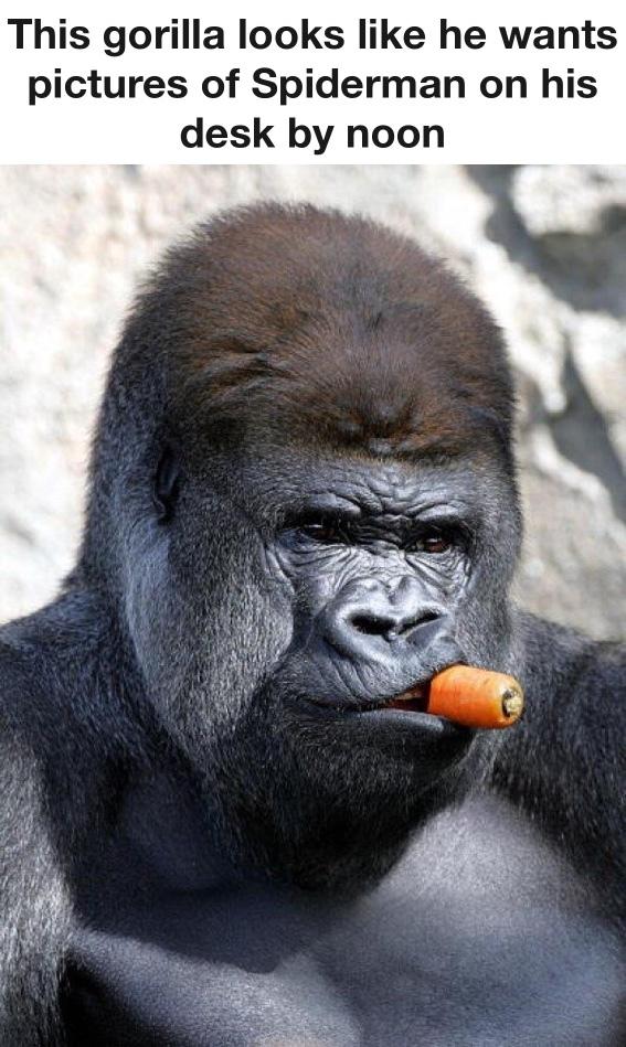 The Best Gorilla Memes Memedroid