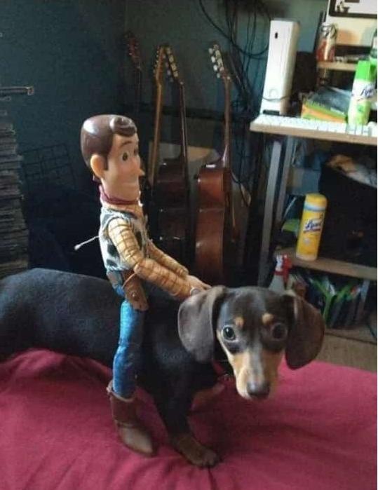 woody montado em seu cachorro salsicha kkkkkkkkkkkkk - meme