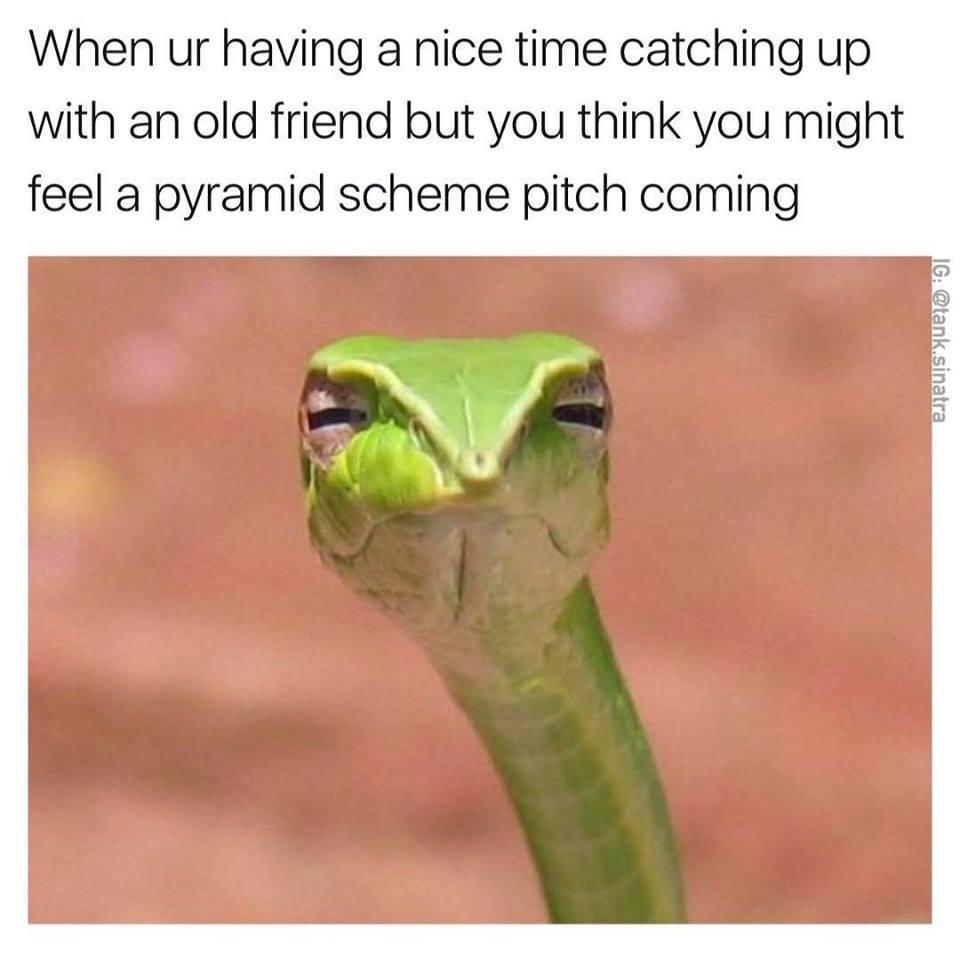Pyramid scheme - meme