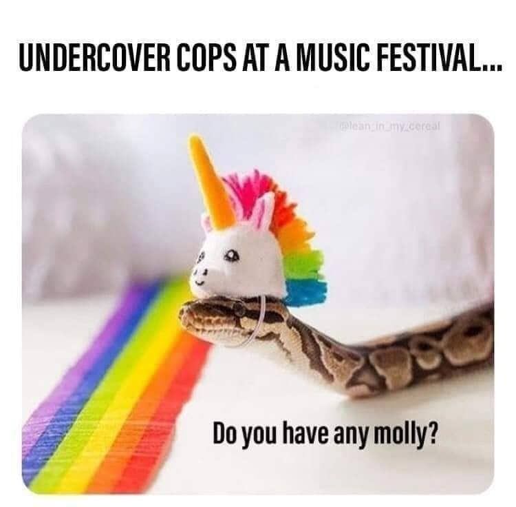 Undercover cops at music festival - meme