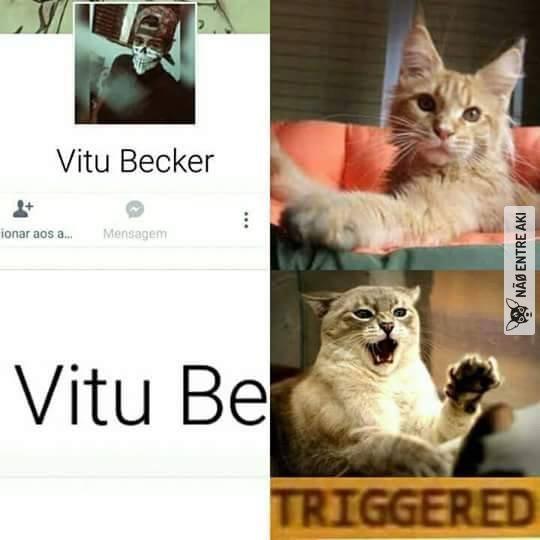 Coitado do gato - meme