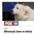 Doggo for pres 2020