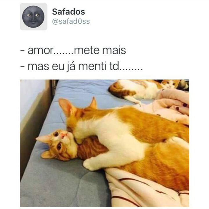 Na vida eu sou esse gato lá atrás - meme