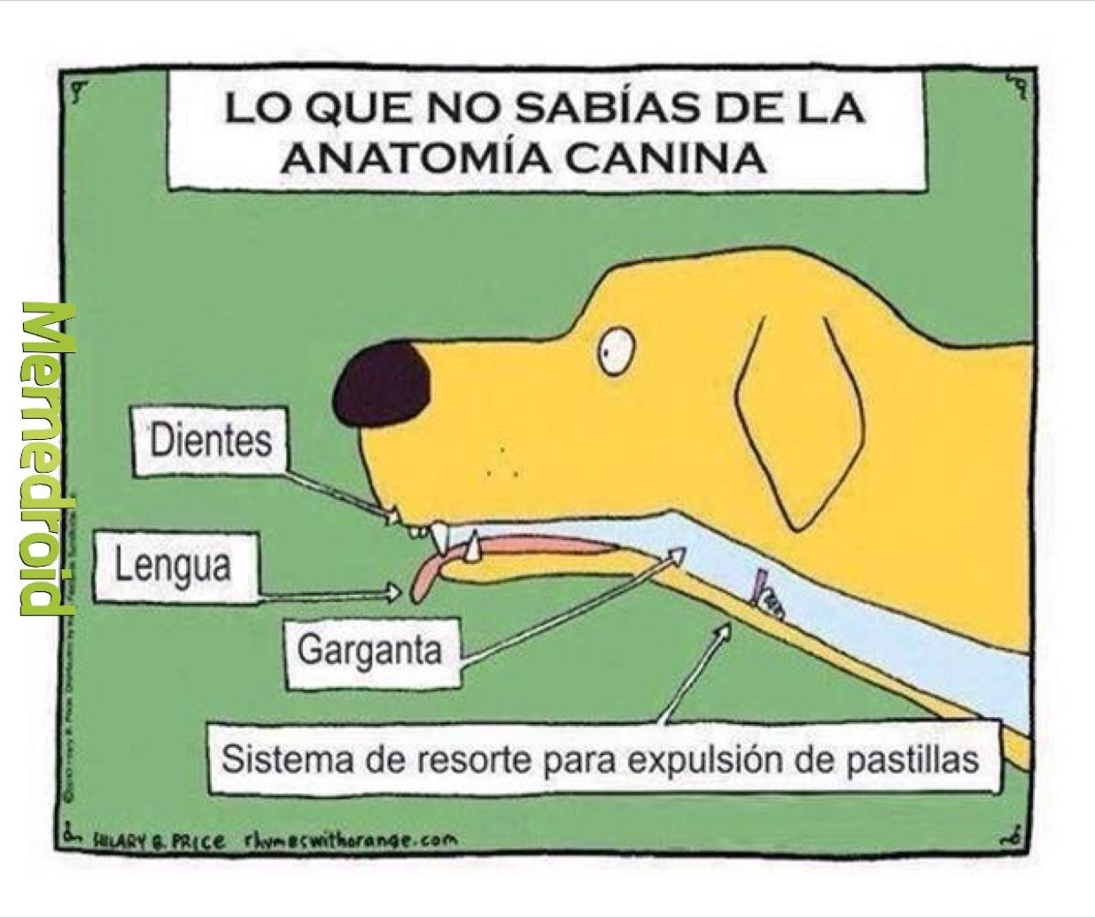 Excelente Colorado State Anatomía Canina Virtuales Bosquejo ...
