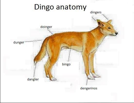 Doinger - meme
