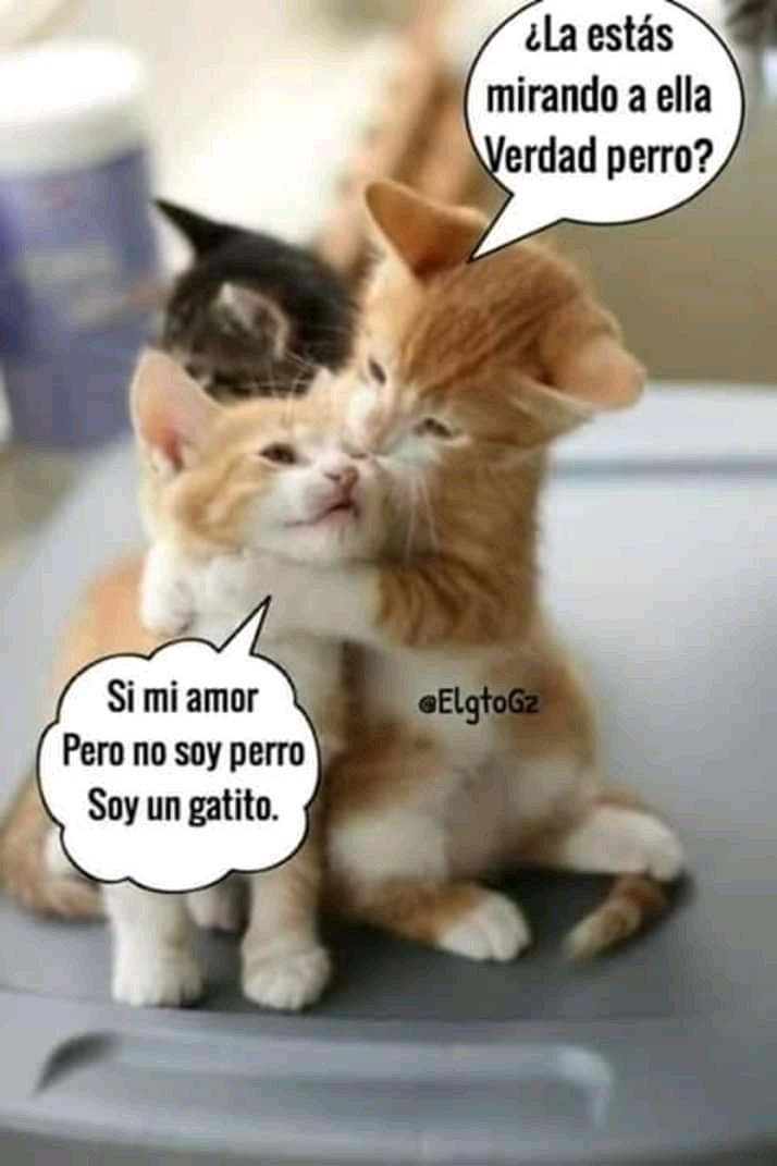 Perro Gato - meme