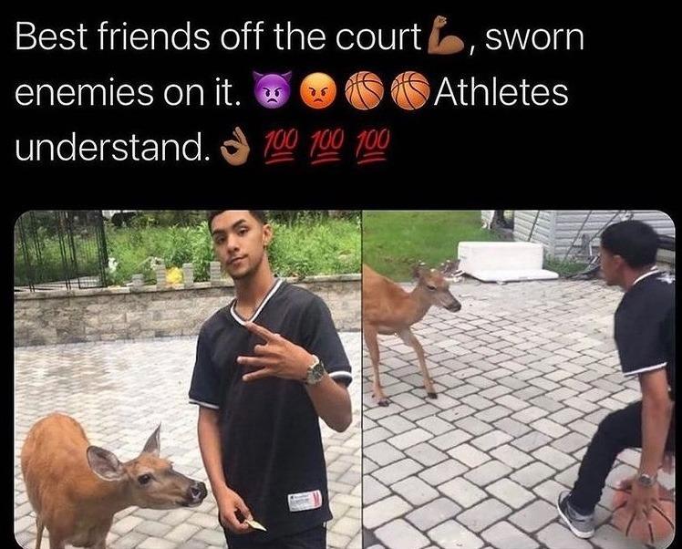 basketball deer - meme