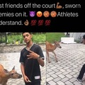 basketball deer