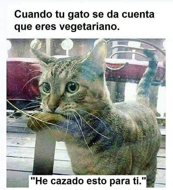Gracias gatito - meme