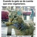 Gracias gatito