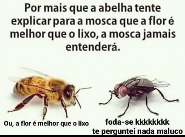 Os MGTOW são como as abelhas e o betas e escravocetas são como as moscas - meme