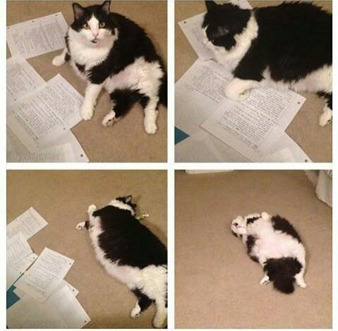 Yo intentando estudiar... - meme