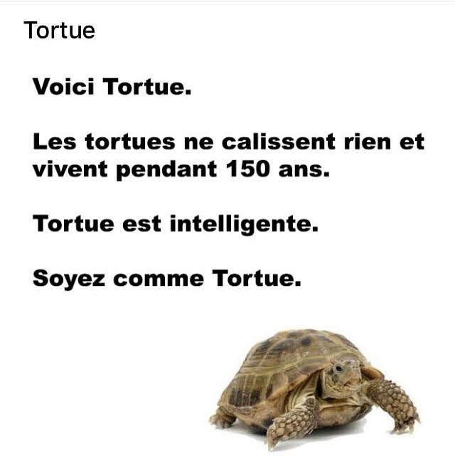 tortue - meme