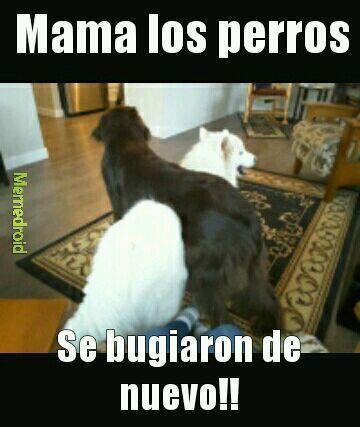 Bug dog :'v - meme