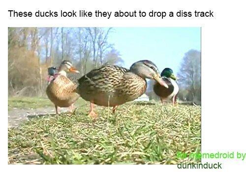 ducks - meme