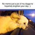 my doggo