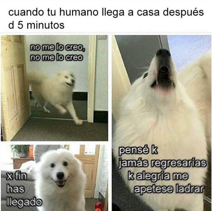 Ese momento de felicidad de nuestros amigos los perros - meme
