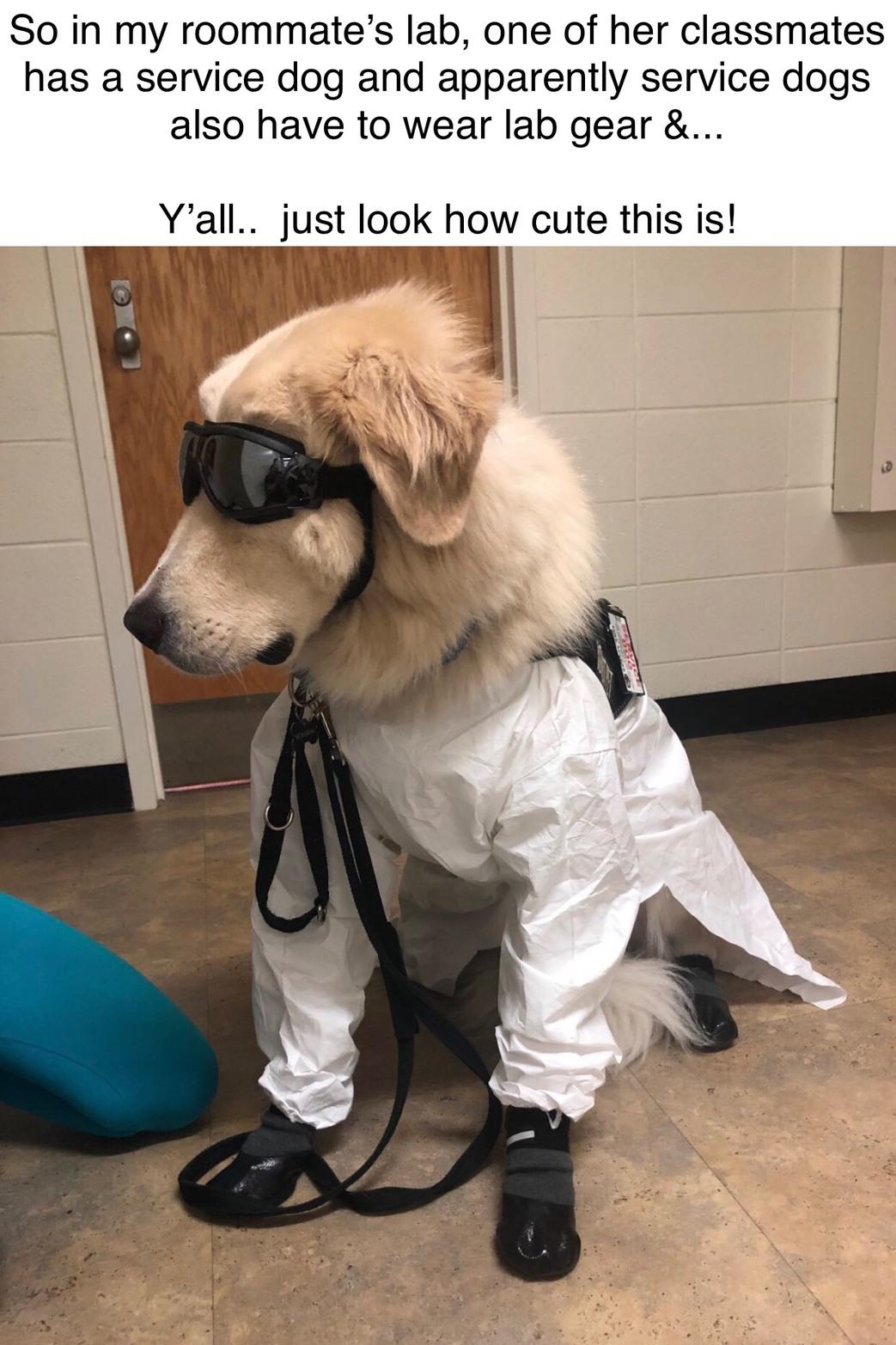 A+ for the Doggo - meme