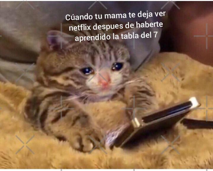 Pobre gato :c - meme