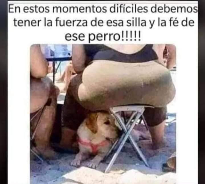 Pobre perro :okay: - meme