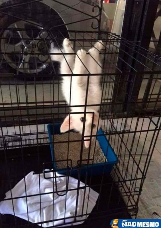 Gato aranha.... =(^.^)= - meme