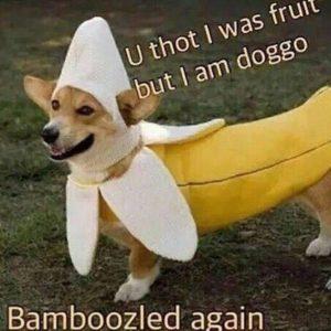 bamboozled - meme