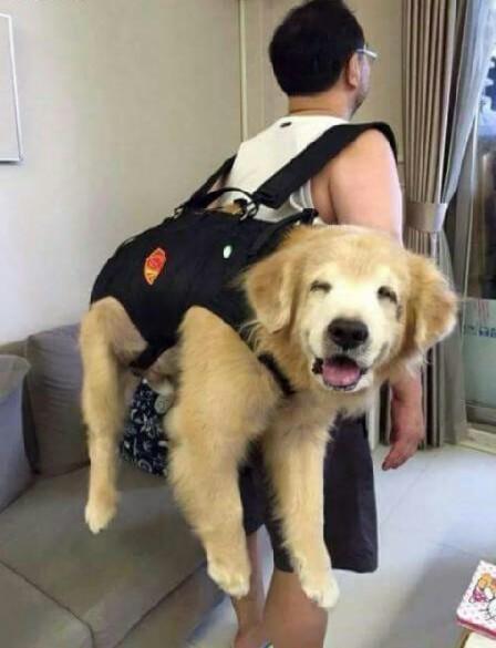 Happy dog is happy - meme