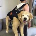 Happy dog is happy